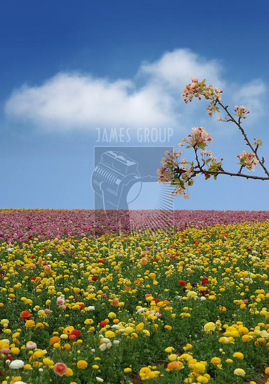 Flower field on a spring day with a cherry blossom brach