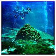 Mermaids, Weeki Wachee Springs, Florida