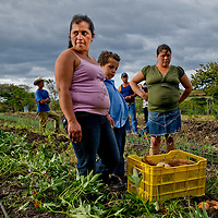 Nicaragua women in the La Espinal community operate a small scale farm cooperative raising vegetables to sell at local markets