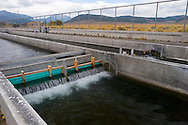 Hot Creek Fish Hatchery, Mono County, California