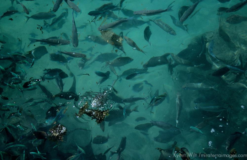 Oceania, South Pacific, French Polynesia, Tahiti. Fish off island of Tahiti.