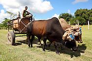 Hauling water on an ox cart in Guantanamo, Cuba.