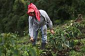 Costa Rica: COOPROSANVITO Fairtrade Coffee