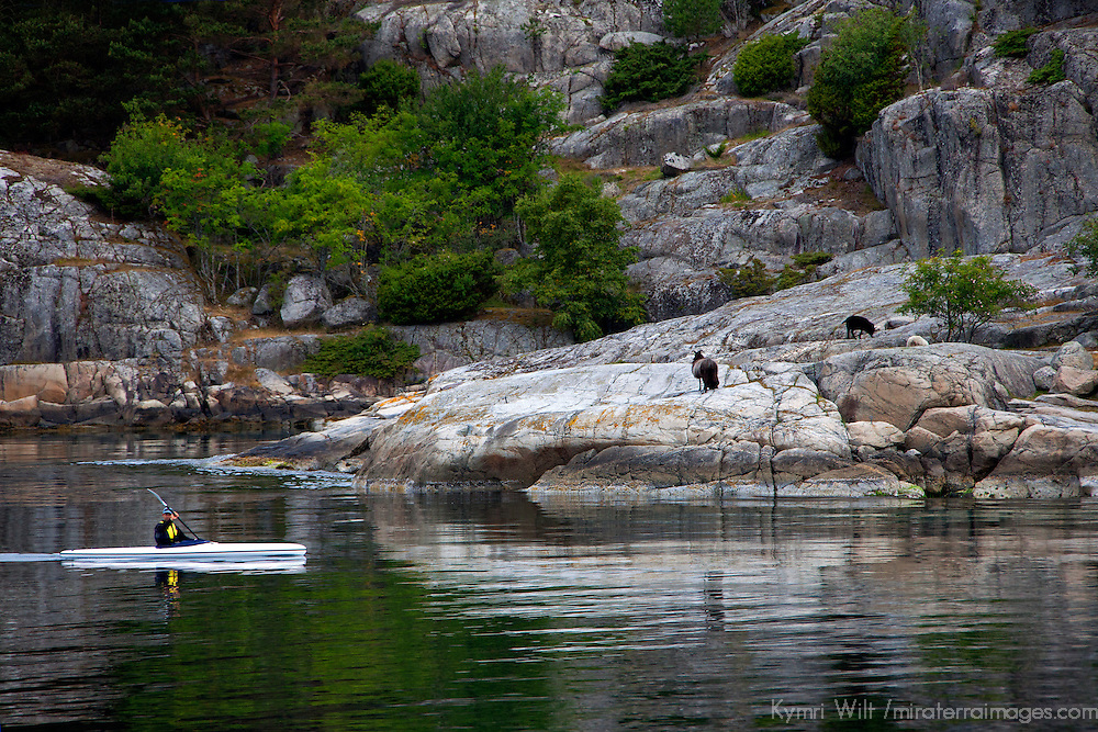 Europe, Norway, Lysefjord. Kayaker in Lysefjord observing goats on the coast.