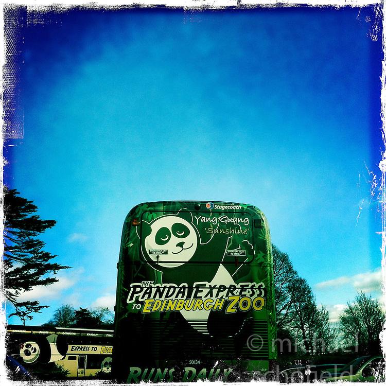 Panda express at Edinburgh Zoo..Hipstamatic images taken on an Apple iPhone..©Michael Schofield.