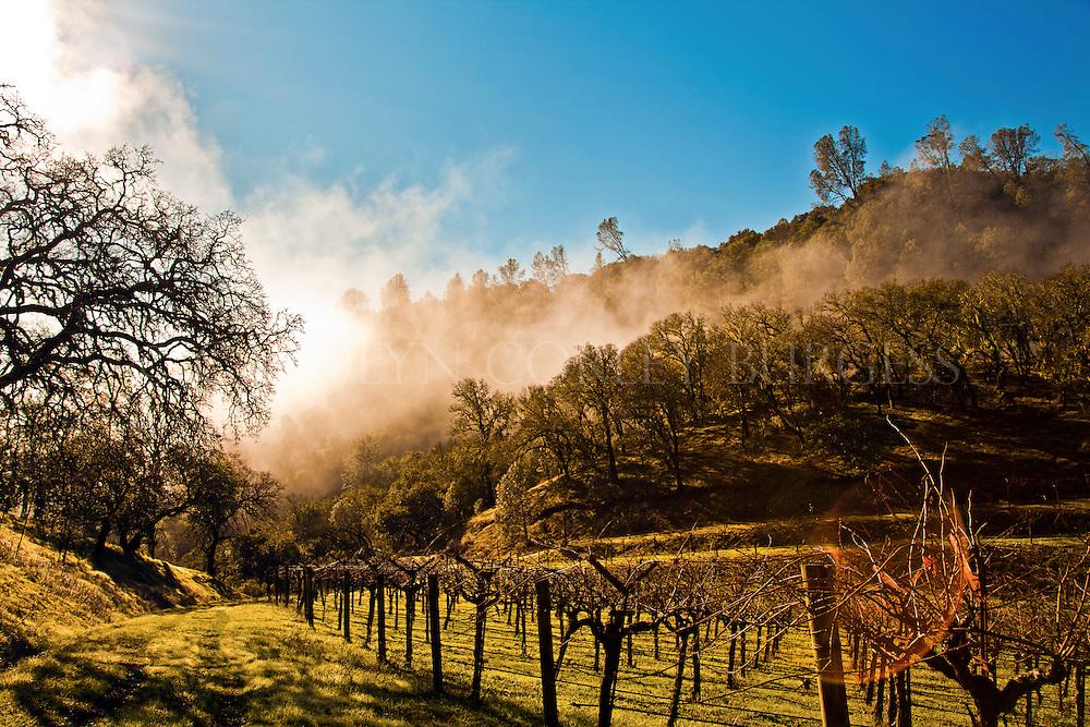 early morning fog rolling in on a Chiles Valley vineyard. Napa Valley ...: carolyncorleyburgess.photoshelter.com/image/i0000mtsaep7zw4s