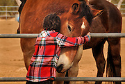 Joe Edwards, 9, of Park City, Utah, hugs Gulliver at Equine Voices Rescue & Sanctuary in Green Valley, Arizona, USA. Joe came with family to the sanctuary to select a horse to sponsor as a Christmas gift from his aunt.