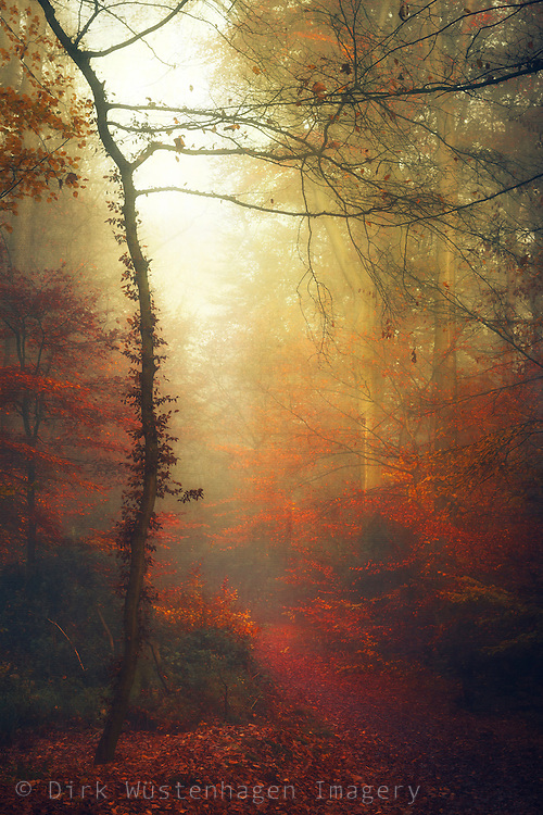 Red leaves on a forest path on a misty morning - textured photograph<br /> Society 6 products: https://society6.com/product/carmine-path_print#1=45<br /> REDBUBBLE : http://www.redbubble.com/people/dyrkwyst/works/18451782-carmine-path?ref=recent-owner