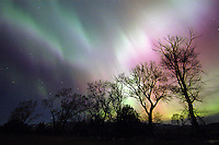 In an unusually active and colorful display of Aurora Borealis (Northern Lights) this far south (45 degrees latitude), the curtains of red and green streaks backlight cottonwood trees along the Yellowstone River.