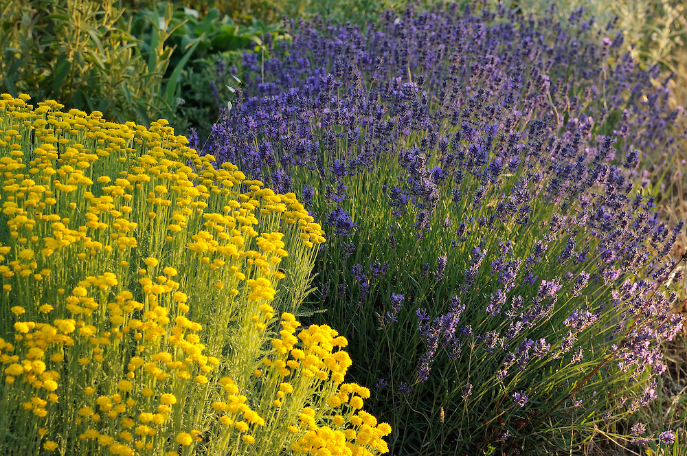 France, Languedoc Roussillon, Hérault, Assas, le jardin de Jean-Jacques derboux, le jardin sec