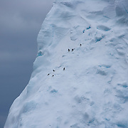 February 12th 2007. Southern Ocean. Birds nest in the face of an iceberg in the Ross Sea.
