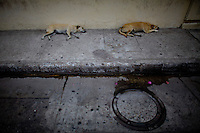 Sleeping dogs on the street in Cartagena, Colombia. .Photo by Robert Caplin