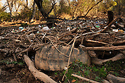 A heavy flow of discarded plastic bottles, tires, logs, and other debris about the length of a football field clogs the Santa Cruz River in the Sonoran Desert south of Tubac, Arizona, USA.  Debris lines and clogs the river in other areas of this riparian area as well.  The river, located in the foothills of the Santa Rita Mountains, runs seasonally with natural run off, but runs most of the year with reclaimed water.  The Juan Bautista de Anza National Historic Trail, a popular hiking trail run by the National Park Service, parallels the river in this area.