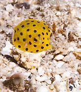 Guam Macro Sea Life 2
