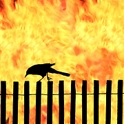Black Bird walking a fence with a background of fire. decisions, choice, edge