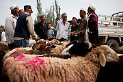 Kashgar: Uighur men discuss prices for sheep at the weekly sunday market on the outskirts of Kashgar...Despite the migration of millions of Han Chinese to the western part of the Xinjiang Uighur Autonomous Region, the Uighur community continue to practice their muslim culture and resist the suppression of their cultural and religious traditions by the Chinese government....The chinese government has been criticised for the redevelopment of the old city, which has involved the destruction of many of the old houses in the town that were built without regulation, officials claiming them to be overcrowded and uncompliant with earthquake codes...Many in the chinese government believe Kashgar to a breeding ground for Uighur separatists, who Beijing claim to have links to terrorism...The european parliament has called for a halt to the cultural destruction of Kashgar, suggesting that Kashgar be added tot he UNESCO World heritage 'Silk Road' project, and calling on the chinese government to develop a genuine Han-Uighur dialogue to adopt more inclusive and comprehensive economic policies in Xinjiang in order to protect the cultural identity of the Uighur population..©JTanner/July 2011