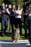 Owl Being Photographed By Tourists, Birds Of Prey Display Dunrobin Castle, Scotland