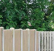 Birds on the fence Birds on the fence