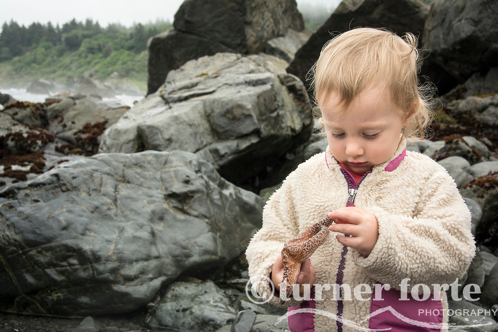 Toddler girl inspects sea star next to tidepools at Patrick's Point State Park, California.