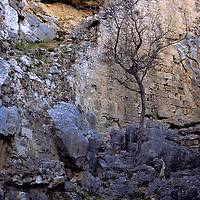 Europe, Cyprus, Limassol. The ruins of an ancient wall held up by a frail tree.