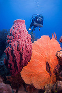 The blue wonders of the Andaman Nicobar underwater world, India