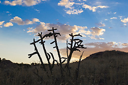 cactus against the sky in Abiquiu, New Mexico