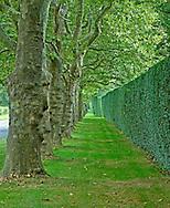 Hedges, New York, Long Island, Southampton