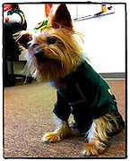 Sweet Pea dressed in a Green Bay Packers jersey. (Sam Lucero photo)