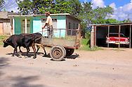 Car and oxen in La Maya, Guantanamo, Cuba.