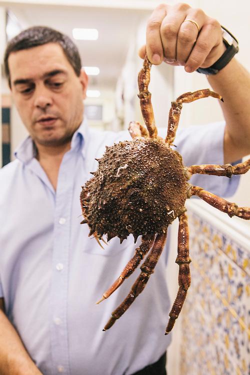 Live spider crab (caranguejo) at Cervejaria Ramiro, Lisbon