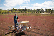 Coquille Cranberry bog, Coos Bay, Southern Oregon Coast