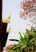 "Gilded ""hang hong"" finials on the roof eaves of a temple"