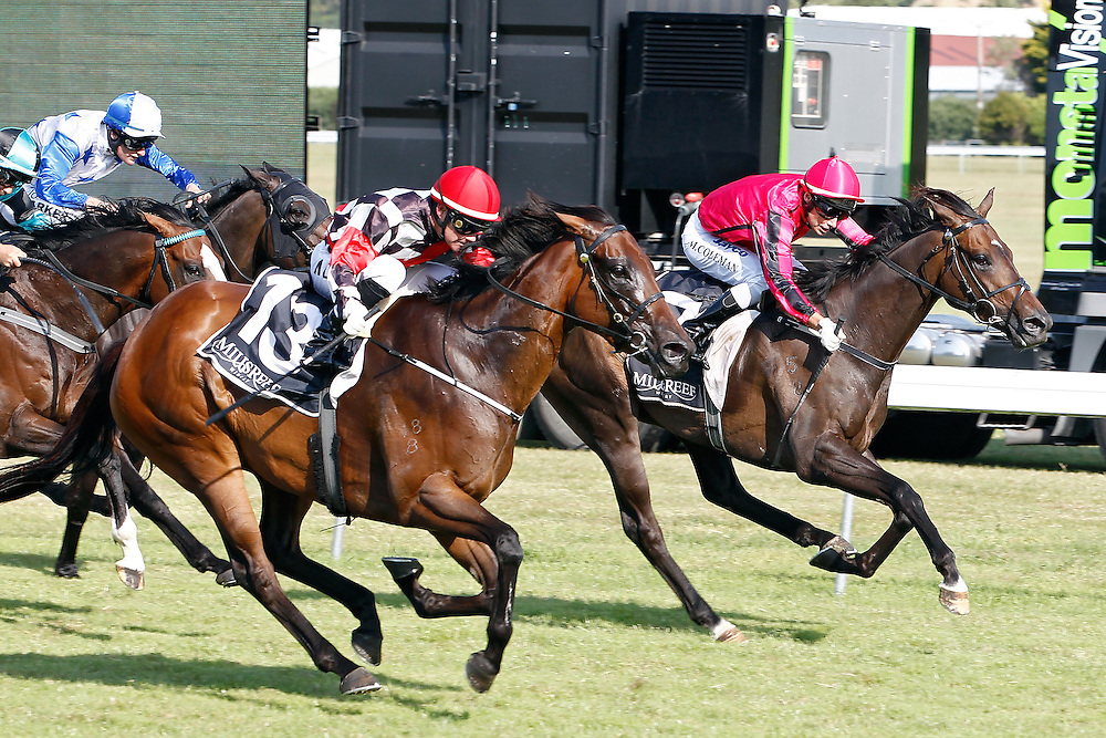 Irish Fling ridden by Mark Du Plessis, left and Natuzzi ridden by Michael Coleman, right, lead the field hime in the 1200m Telegraph Handicap at Trentham Racecourse, Wellington, New Zealand, Saturday, January 18, 2014. Credit: SNPA/Dean Pemberton