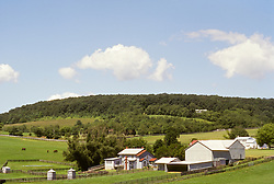 Landscape, rolling hill pasture, grazing horses.