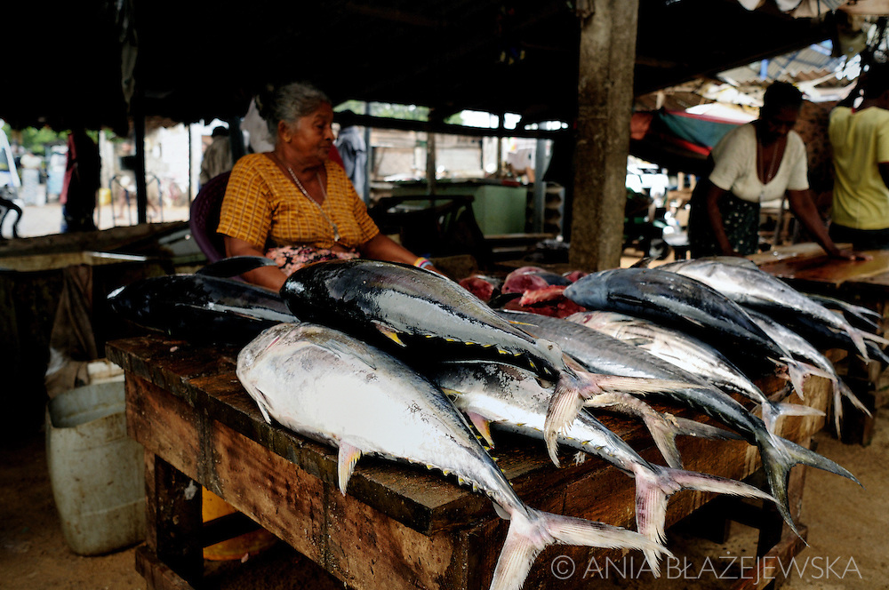 Sri Lanka, Negombo. Woman selling giant fish in the fish market.