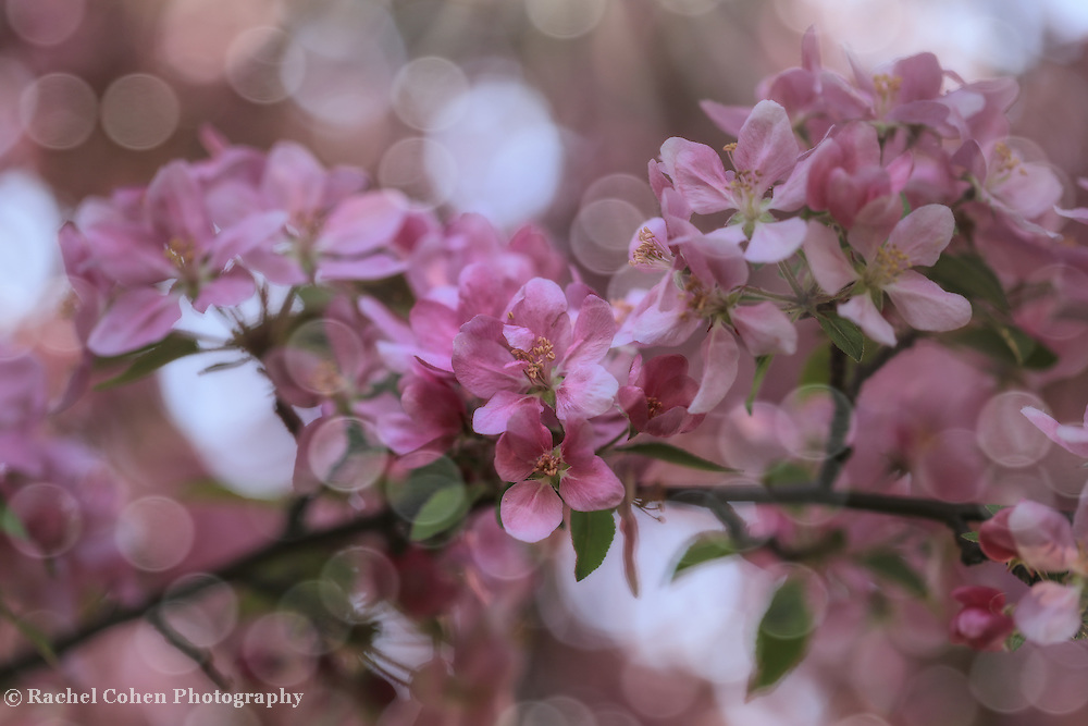 &quot;Dance of the Fairies&quot;<br />
