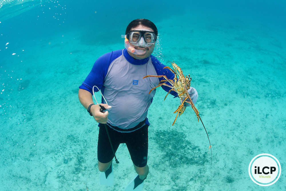 An artisanal or small-scale lobster fisherman free dives using a lasso's to catch the Caribbean Spiny Lobster. The lobsters are then placed into a plastic cage and towed to a holding pen.  Sian Ka'an Biosphere Reserve; Punta Herrero, Mexico