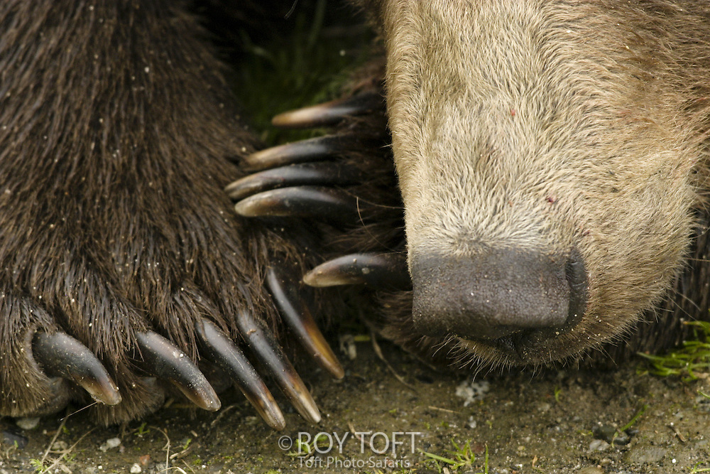frpv 1000 8 claws