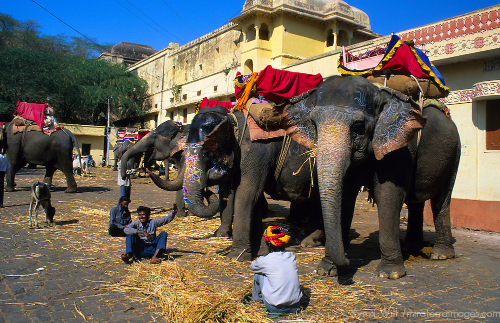 Asia, India, Rajasthan. Painted Elephants at Amber Palace