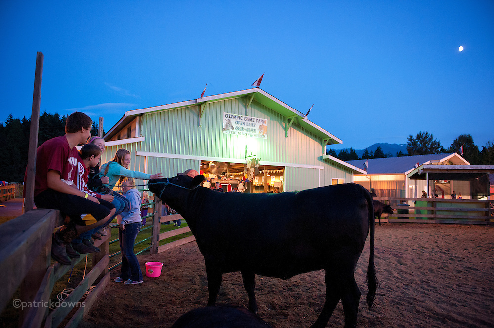 Give me back my hat, cow! These 4-H kids hang out at the show paddock after dark under the moon, far away from the action on the Midway.