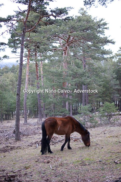 Horses in the mountains of Avila, Spain