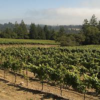 Flowers Winery, Sonoma Coast, California