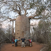 People gather around a large baobab tree in the spiny forest of Madagsacar. Most of the spiny forest in the region has already been destroyed and many baobab trees have been cut down to provide water for livestock. Reniala Nature Reserve, Madagascar