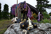 Samurai helments resting on a rock nest to a decorated horse at the house of Samurai Taisho of Minami Soma during Soma Nomaoi festival.