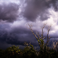 Low trees are silhouetted against approaching storm clouds in Everglades National Park, Florida.