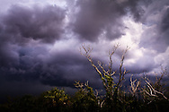 Low trees are silhouetted against approaching storm clouds in Everglades National Park, Florida.<br /> WATERMARKS WILL NOT APPEAR ON PRINTS OR LICENSED IMAGES.