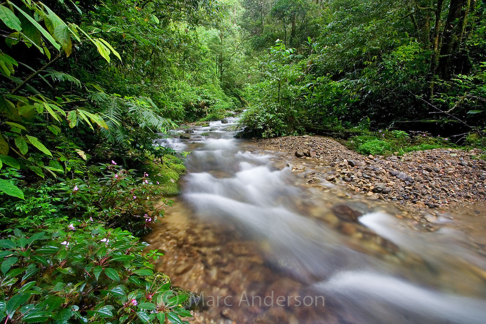 Rainforest Stream Malaysia Marc Anderson Photography