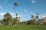 Landscape in the region of Souvenance, Haiti. January 23, 2008.