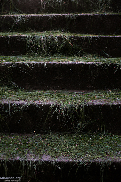 The stairs at the Movimiento de Desarraigados war victims office in Nebaj, Guatemala, is covered with pine needles as Ixil Mayan residents gather to receive the human remains of 36 war victims for a proper burial. Most of the victims, exhumed from mass graves in Xe'xuxcap, near Acul, starved in the mountainside while fleeing State-led repression in 1982. Most of the remains, exhumed by members of the Forensic Anthropology Foundation of Guatemala (FAFG) in 2013, were identified using DNA analysis and buried 35 years after their death. Nebaj, Quiché, Guatemala. February 2, 2017.