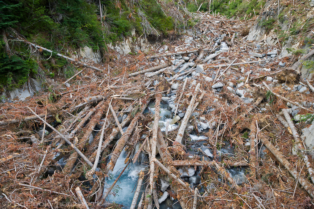 Snow Avalanche Damage on Stevens Creek, Mount Rainier National Park, Washington, USA